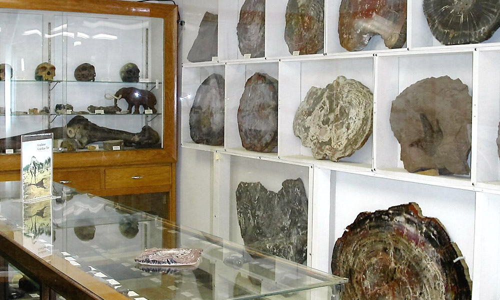 Petrified wood displays